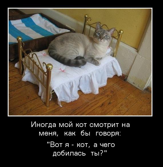 Картинки по запросу я кот а чего добился ты