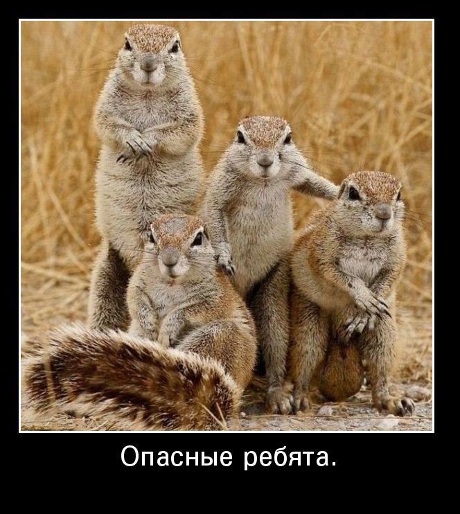 Мемы и приколы на тему «Пацаны» — Шутки за 300   742x664