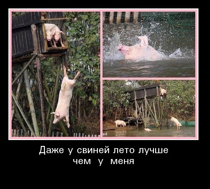 Смешные картинки ура лето