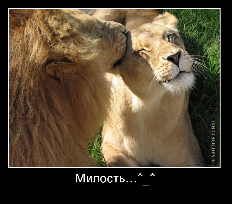 Львыи к сексу спокойны извиняюсь