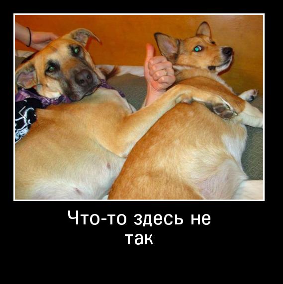 http://www.ademotivatory.ru/pics_max/images_817.jpg